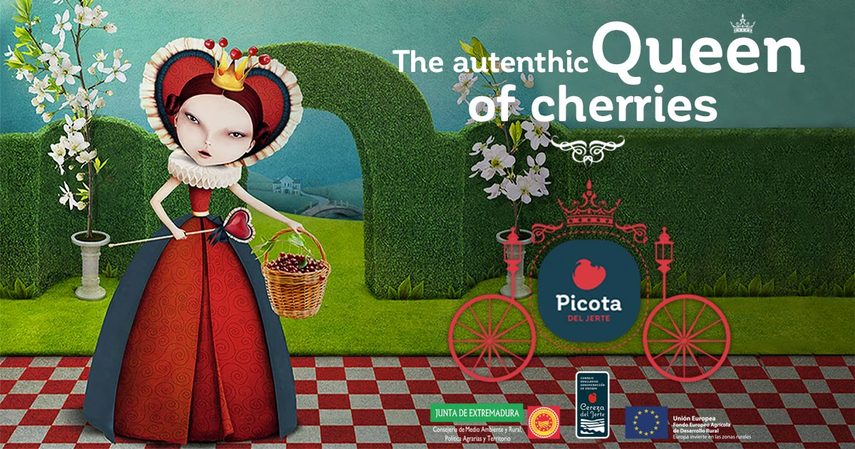 Jerte Cherries -The queen of cherries